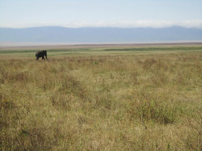 Lonely elephant in the crater